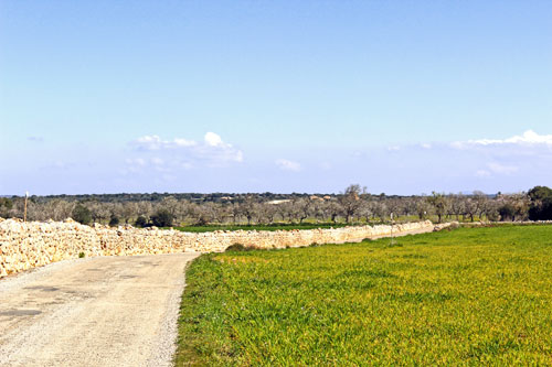 Campos Finca Plots for sale in a quiet location in mallorca