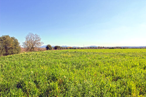 Campos land sales in the southeast of Mallorca