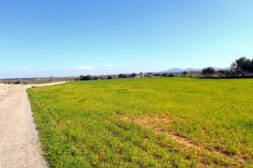 Campos property as Country Property in Mallorca Southeast Buy