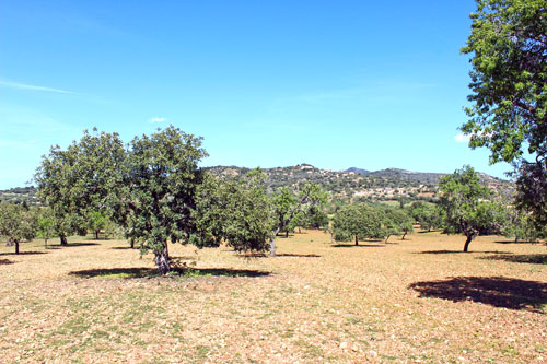 Cas Concos Finca plot with panoramic views on a hillside in the southeast of Mallorca