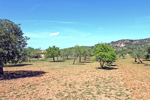 Cas Concos land for sale in the southeast of Mallorca