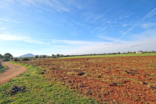 Felanitx plots for sale in a quiet location in Mallorca