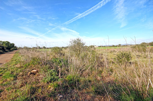 Plot of land for sale in Felanitx and area of ​​Mallorca
