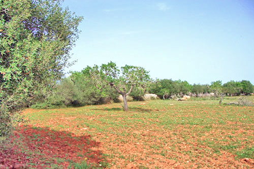 Plot for sale Santanyi, real estate sales in Mallorca