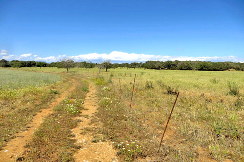Estate with country house ruins and large plot for sale in Campos