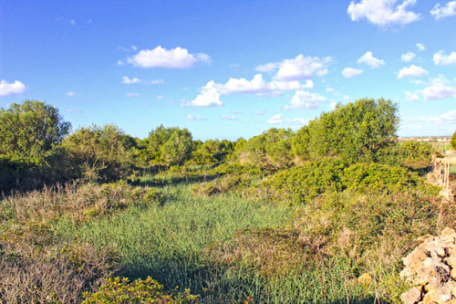 Mallorca finca plot with planning permission for sale in Ses Salines
