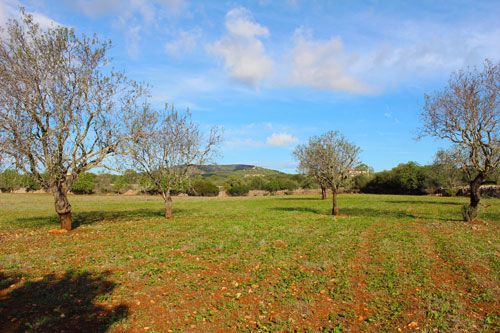 Santanyi houses for sale in Mallorca
