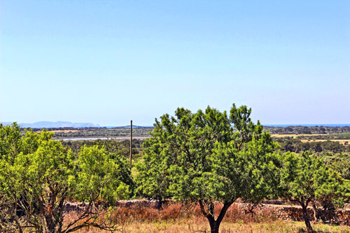 Ses Salines Land for sale with sea view and old stock