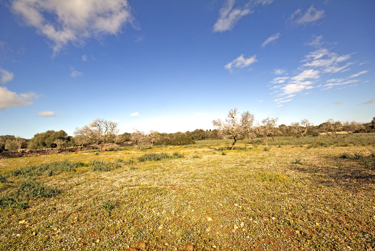 Ses Salines Rural Land for sale in South East of Mallorca