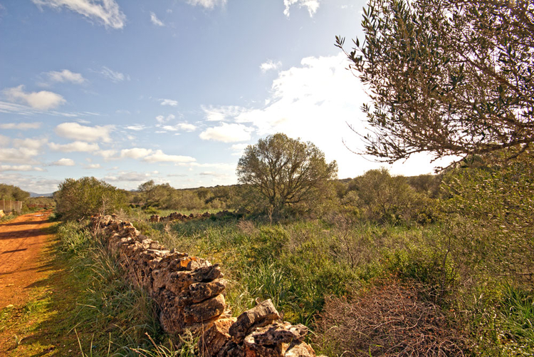 Ses Salines Finca plot for sale in a quiet location