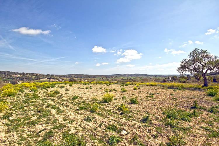cheap plot with spectacular views for sale in Porreres