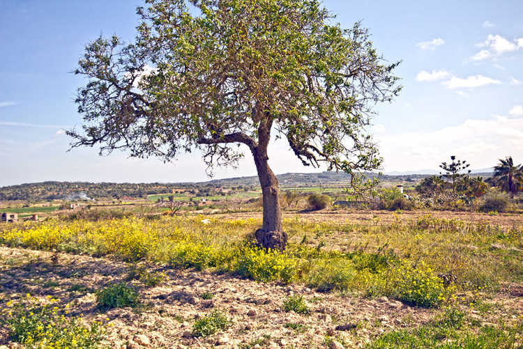 Finca-plots in Porreres in the center of Mallorca for sale