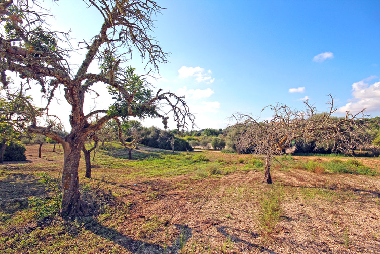 Land for sale on the golf course Vall Dor Golf in Mallorca