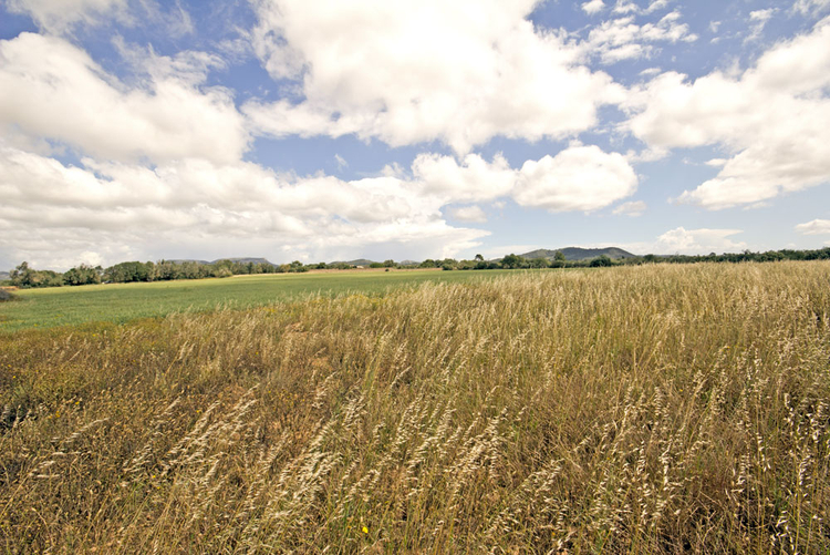 Land for keeping horses in Llucmajor for sale