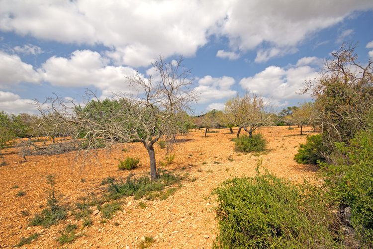 Finca plot for sale at Hamburger Hill in Santanyi