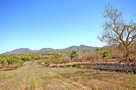 Cas Concos land sales in rural areas in Mallorca