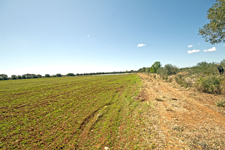 Campos Finca plot for sale low in the southeast of Mallorca