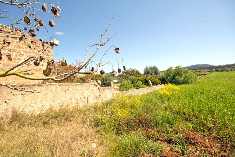 Plot with building on the outskirts of Algaida