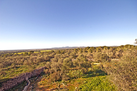 Finca Plot for sale in South East of Mallorca