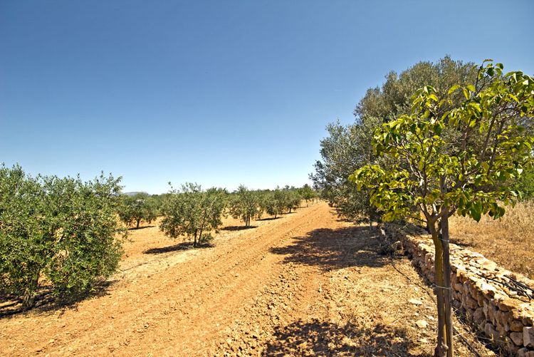 constructible rural plot with vineyard in Campos