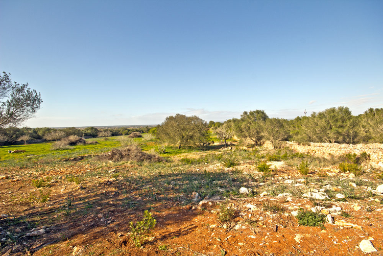 Buy land overlooking Campos in the southeast of Mallorca