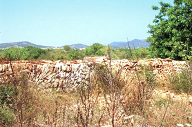 Mallorca Finca plot, Plot with water and electricity in Santanyi