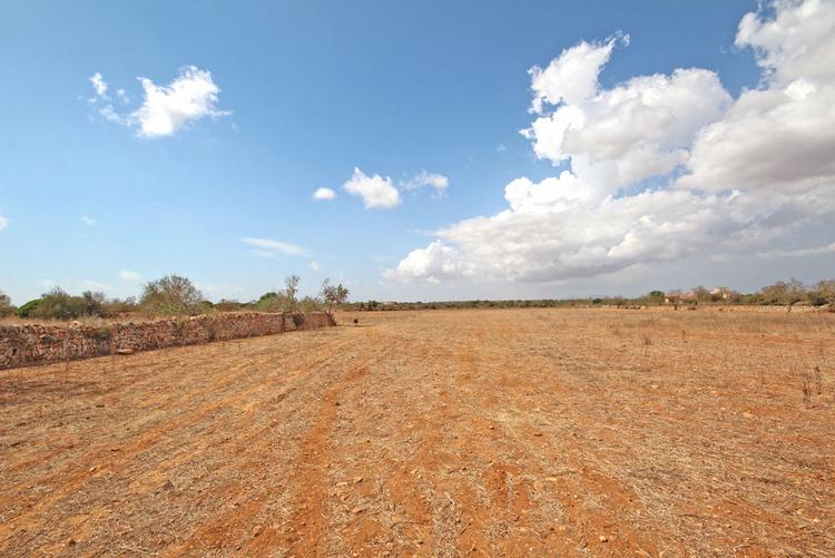 Ses Salines rural land for sale in the southeast of Mallorca