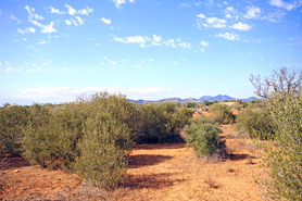Cala Figuera buy Finca plot at the nature reserve Mondrago