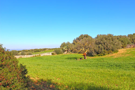 Campos Finca plot with view for sale in Mallorca