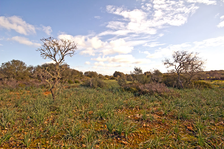 Ses Salines Buy plots in rural areas in Mallorca