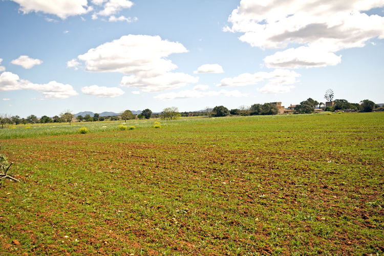 Campos Finca plot in Sa Sorda low for sale