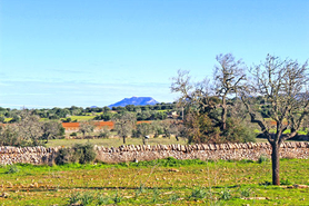 Immobilien Mallorca Immobilienmakler Real estates properties  santanyi