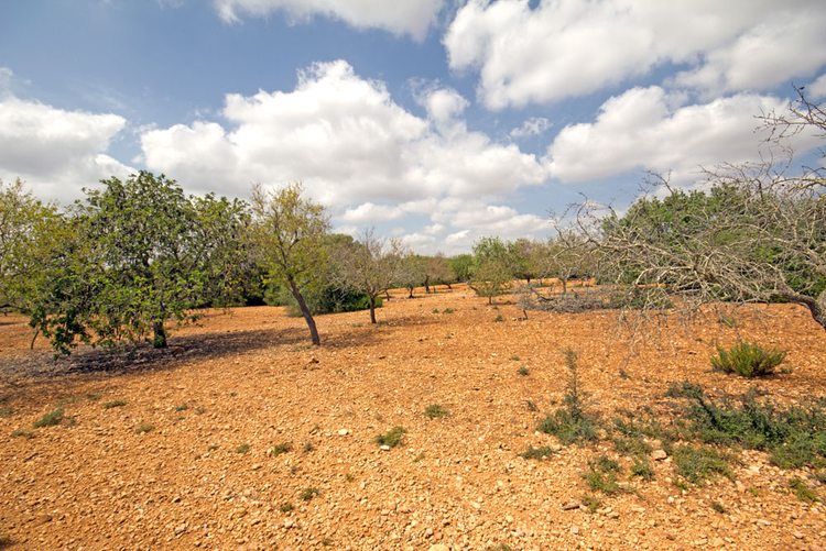 Hamburger Hill plot with sea view for sale in Majorca