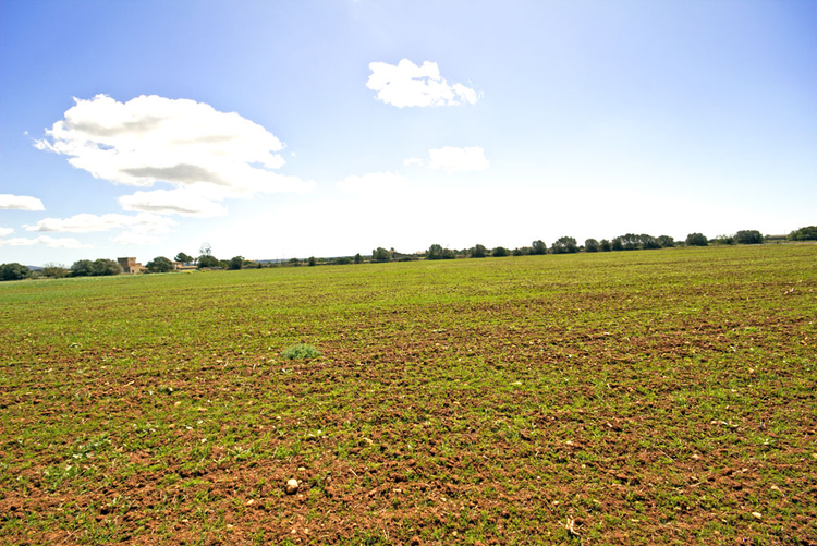 Finca plot low for sale in Mallorca