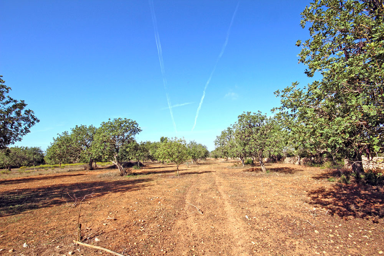 Cas Concos land sales in the southeast of Mallorca