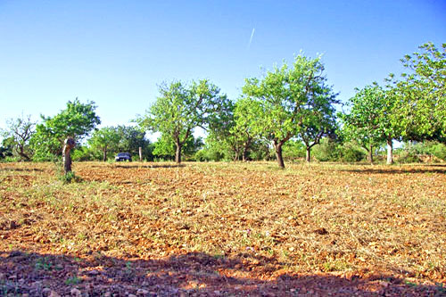 Real Estate Buy Land Finca Mallorca Santanyi Ses Salines Finca Land