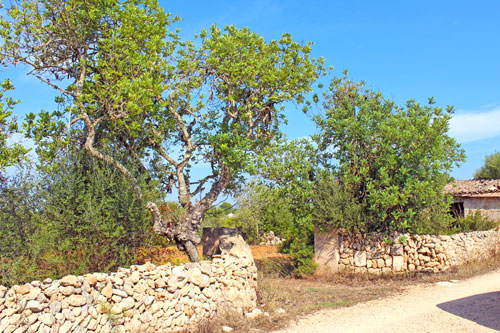 Llucmajor Ruin with a great landscape view for sale in Mallorca