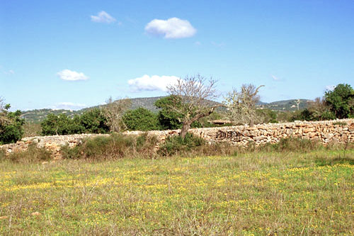Mallorca property for sale buying real estate Finca Santanyi Property