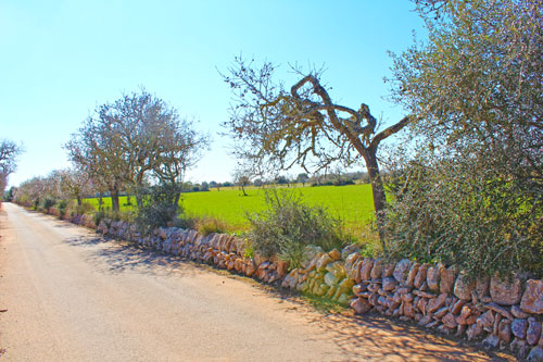 Ses Salines Mallorca Finca plot to buy