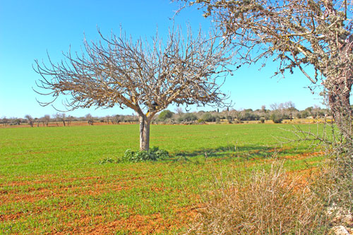 Ses Salines Plot for sale in Cas Perrets