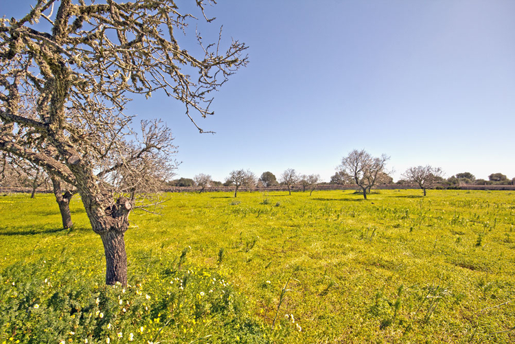 Land sales in the region of Santanyi Mallorca
