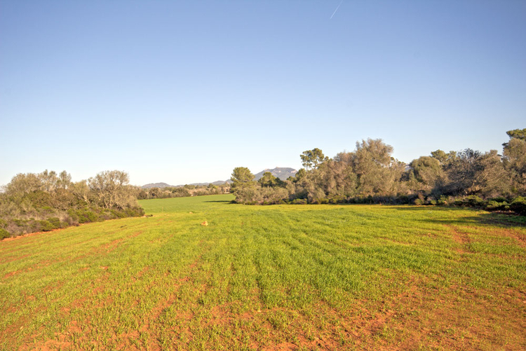 Land with planning permission wells and electricity sale in Majorca