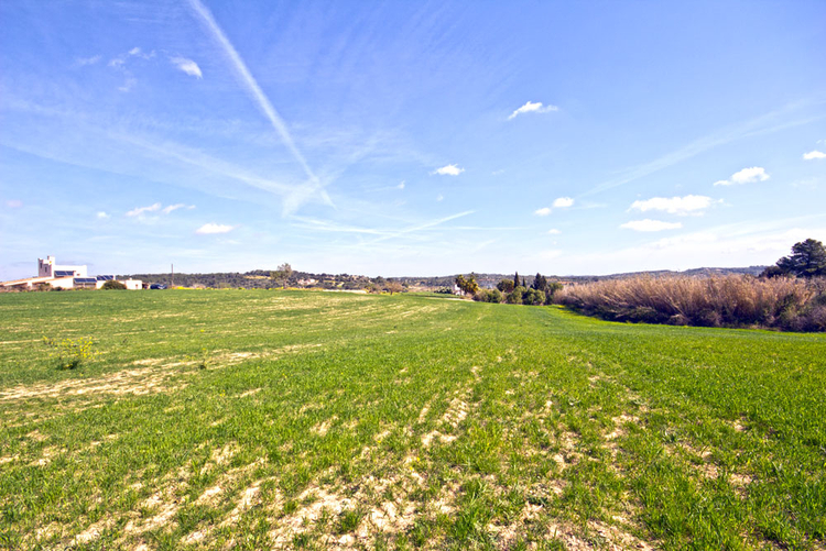Real estate agents with land for sale in Porreres