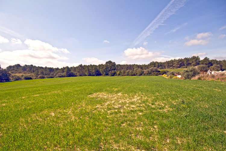 favorable land deals in the island of Mallorca