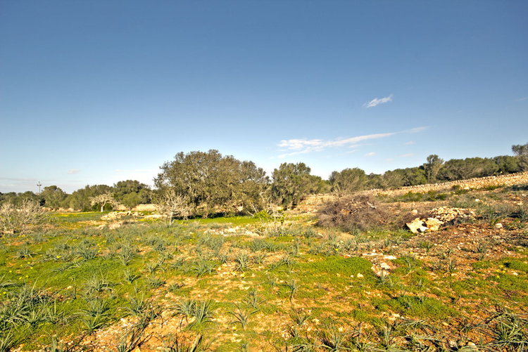 rural plot with great views for sale in Campos