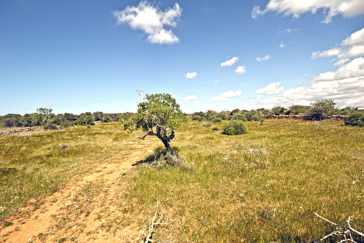 Finca plot for sale with electricity in Ses Salines