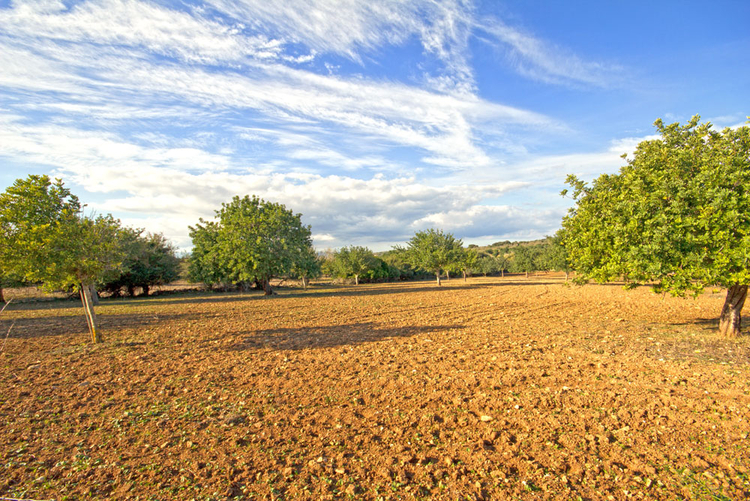 Finca plot with planning permission for sale San Lorenzo