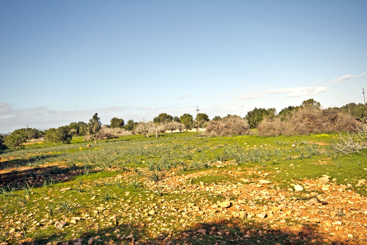 Rural property for sale in Mallorca in the southeast of the region Campos