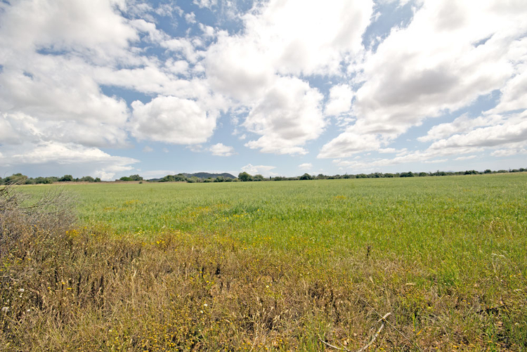 Land sales in Llucmajor in the south of Mallorca