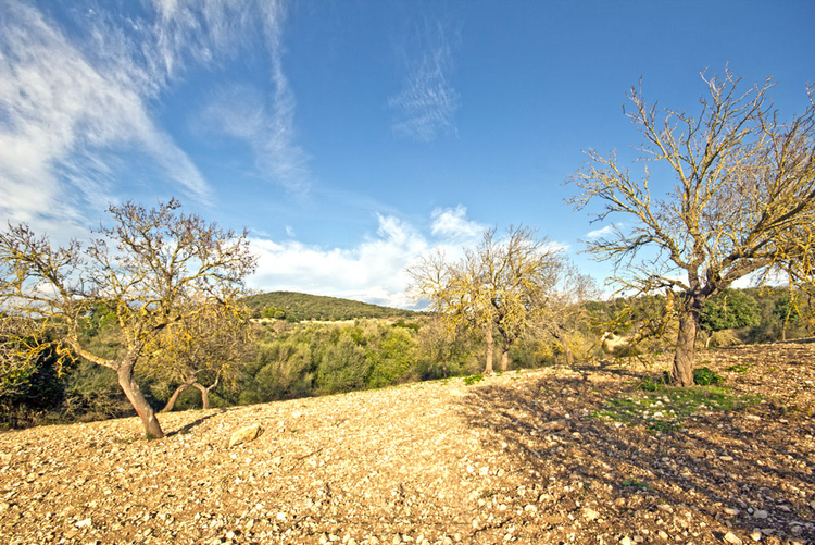 Land for Sale in San Lorenzo in the northeast of Mallorca